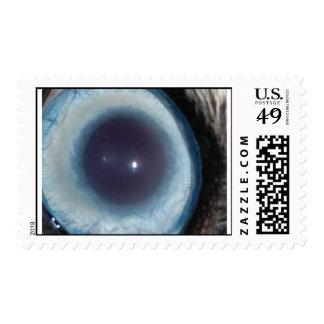 eye of Sara Stamps