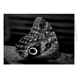 Eye of the Butterfly Notecard