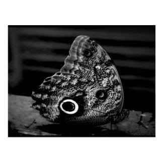 Eye of the Butterfly Postcard
