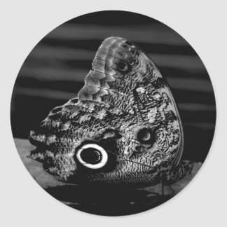 Eye of the Butterfly Sticker