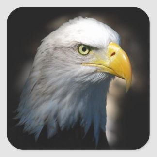 Eye of the Eagle Stickers