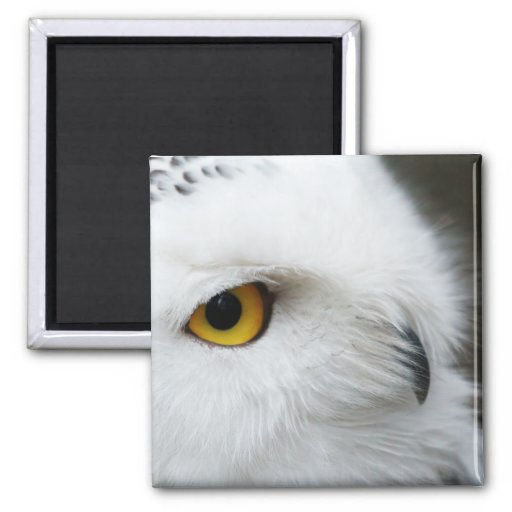 Eye of the Owl 2 Inch Square Magnet