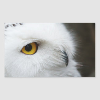 Eye of the Owl Rectangular Sticker