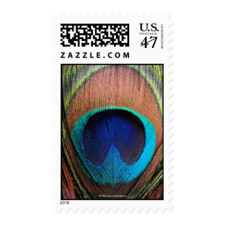 Eye of the Peacock Feather Close-Up Postage