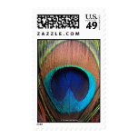 Eye of the Peacock Feather Close-Up Postage Stamp