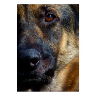 Eye of the Shepherd ACEO Art Trading Cards Large Business Cards (Pack Of 100)