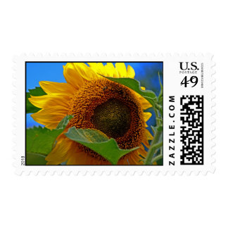 Eye of the Sunflower Postage