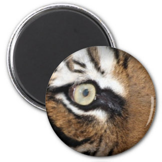 Eye Of The Tiger Fridge Magnets