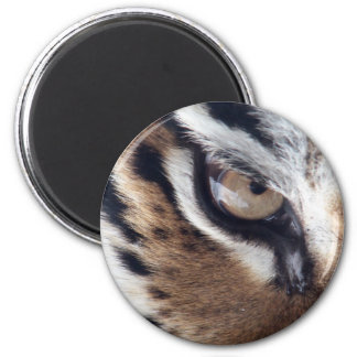 Eye of the Tiger Magnet