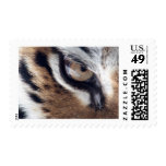 Eye of the Tiger Postage Stamp
