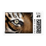Eye Of The Tiger Postage Stamps