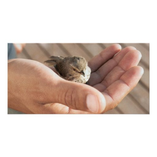 Eye on the Sparrow Christian Photo Card