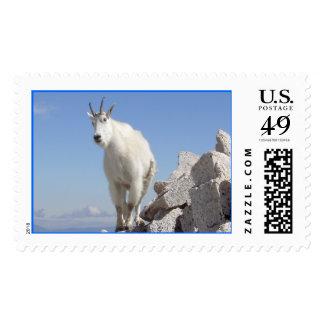 Eye on You Postage Stamp