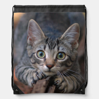 Eye to Eye With a Silver Tabby Kitten Drawstring Backpack