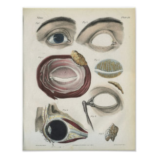 Eye Vintage Anatomy Print