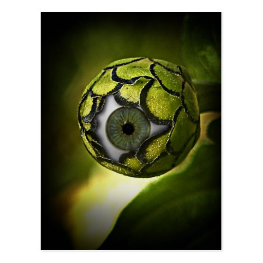 Eye will See you In The Garden, Tonight! Postcard