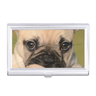Eyes of a cute French Bulldog puppy Business Card Holder