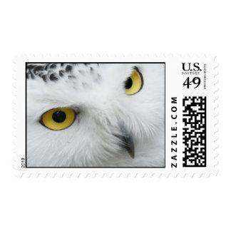 Eyes of a Snowy Owl Postage