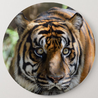 Eyes of a Tiger Pinback Button