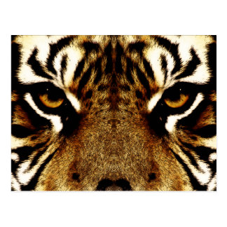 Eyes of a Tiger Postcard