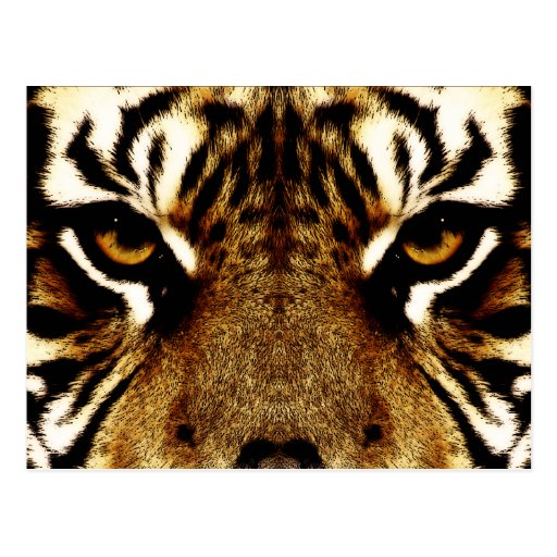 Eyes of a Tiger Postcards