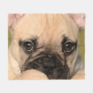 Eyes of Cute French Bulldog Puppy, comfort Fleece Blanket