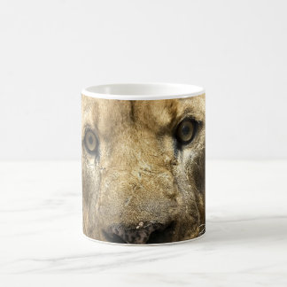 Eyes of Lion Coffee Mugs