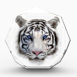 """Eyes of the Tiger Acrylic Award<br><div class=""""desc"""">When we dare to stare into the eyes of this white tiger cat,  we feel a hypnotic power we try to combat.  But,  the trance can fill us with his awe and become prey to nature&#39;s jungle law.</div>"""
