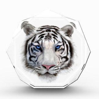 Eyes of the Tiger Award