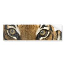 Eyes of the Tiger Bumper Sticker