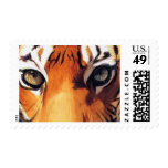 """""""Eyes of the Tiger"""" Paul Jackson Watercolor Stamps"""