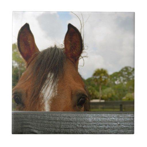 eyes over fence horse head ceramic tile