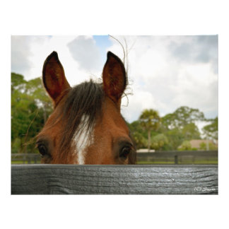 eyes over fence horse head flyer design