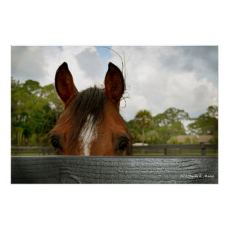 eyes over fence horse head posters