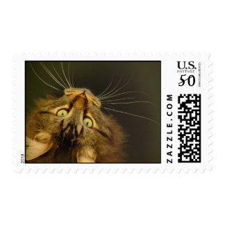 eyes,whiskers,ears and nose postage