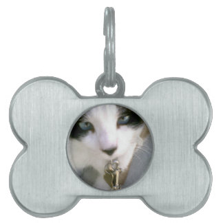eyes windows of the soul kitty pet name tag