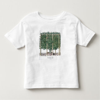 Eystettensis indica del Ficus, del 'Hortus Eystet T Shirts