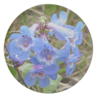 F0003 Blue Wildflowers Party Plate