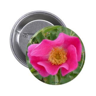 F0004 Alberta Wild Rose button