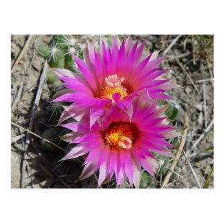 F0005 Cactus Flowers Post Cards