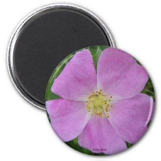 F0011 Alberta Wild Rose magnet