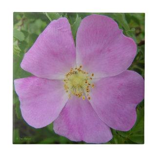 F0011 Prairie Wild Rose (Rosa Arkansana) Ceramic Tile