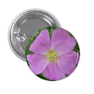 F0011 Prairie Wild Rose (Rosa Arkansana) Pinback Button