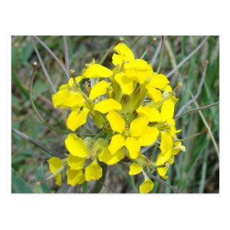 F0014 Yellow Wildflowers postcards