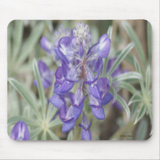 F0018 Purple Wildflower/Annual Lupine mouse pad