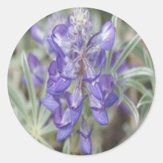 F0018 Purple Wildflowers Annual Lupine Round Sticker