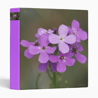 F0019 Purple Wildflowers Dames Rocket Binder