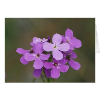 F0019 Purple Wildflowers Dames Rocket Card