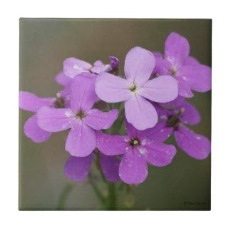 F0019 Purple Wildflowers Dames Rocket Tile