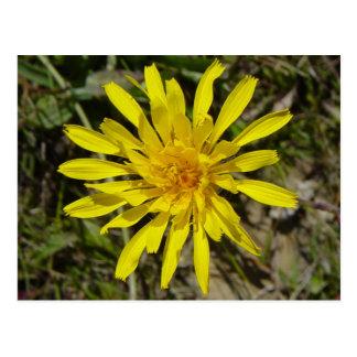 F0021 Yellow Wildflower postcard